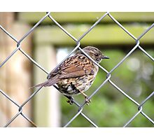 Female Dunnock Perching On Wire Photographic Print