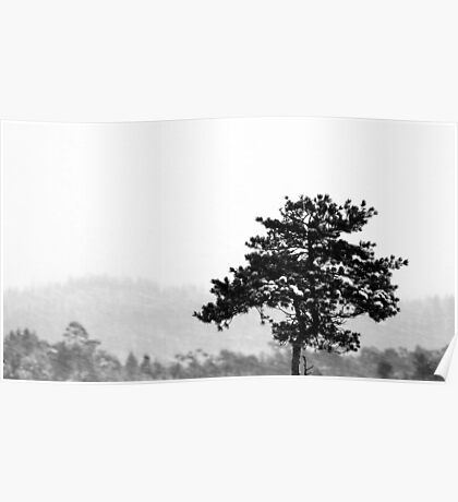 16.1.2013: Lonely Pine Tree Poster