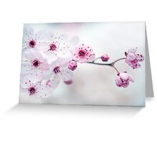 Black Cherry Plum Blossom Greeting Card