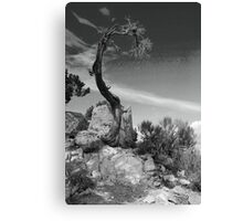 Survival - Grand Canyon Canvas Print