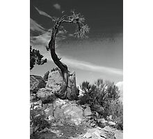 Survival - Grand Canyon Photographic Print