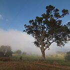 Bega morning  by Tom McDonnell