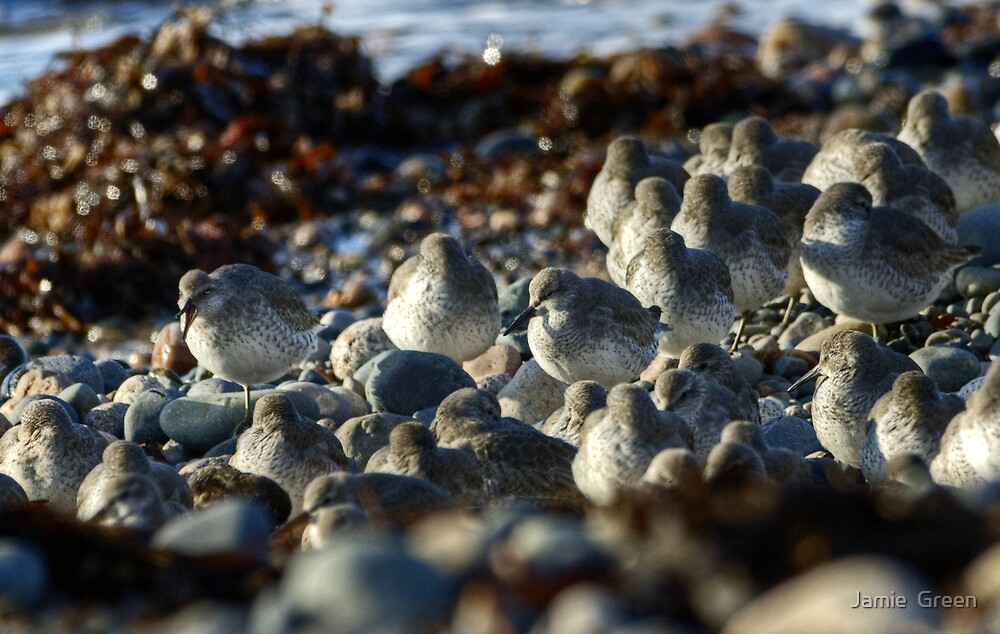 Beach Pebbles Or Knot? by Jamie  Green