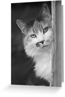 Hide & Seek by Jessica Loftus