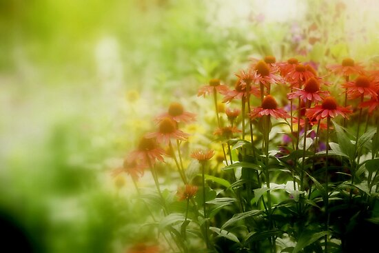 """""""Dreaming Monet """" by Rosehaven"""