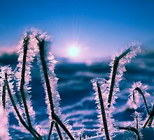 So cold by THHoang