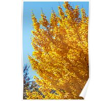 Yellow Linden on Blue Sky Poster