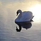 Swan by CreatedPhoto