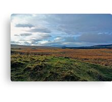 Galloway Forrest Canvas Print