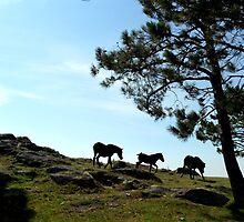 Postcard Series #1. Galicia by SouvenirCo