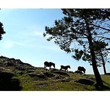 Postcard Series #1. Galicia Photographic Print
