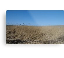 Norfolk Skies Metal Print