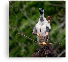 Griffon vulture Legolas Canvas Print