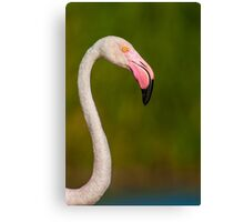 Flamingo portret with droplets of water on its head Canvas Print