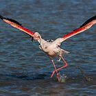 Running Flamingo by LaurentS