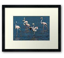 Flamingo's Framed Print