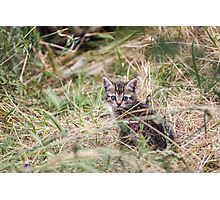 Little Kitten in the bushes Photographic Print