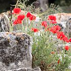 Minoan Stones & Poppies by Francis Drake