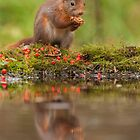 Red Squirrel reflection by LaurentS