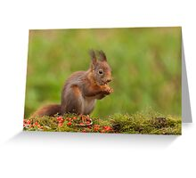 Red Squirrel eating nuts Greeting Card