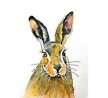 Hare 36 Photographic Print