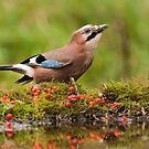 Jay by LaurentS