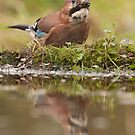 Jay reflection by LaurentS
