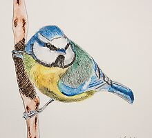 Blue Tit by Colin Shepherd