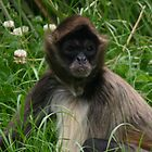 Monkey sitting in the grass  by Coemlyn