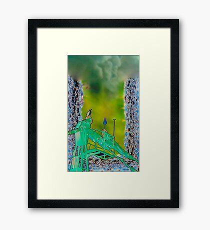 Osprey's pirch Framed Print