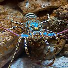 cray fish by Glen Johnson