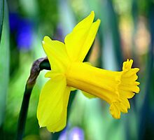 Daffodil With Natural Bokeh by Gene Walls