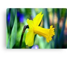 Daffodil With Natural Bokeh Canvas Print