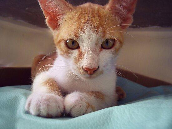 Kitty II by André Luiz Barbosa