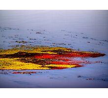 Psychedelic Algae  Photographic Print