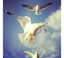 gulls Photographic Print