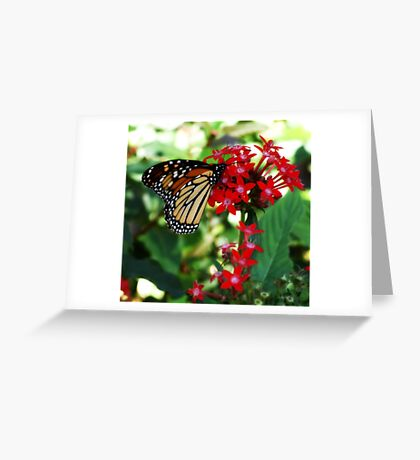 Evening Drink Greeting Card