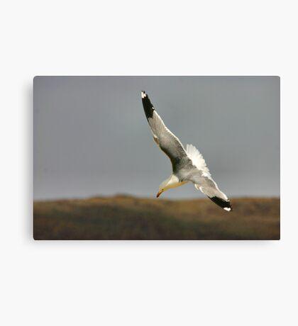 Diving Gull Canvas Print