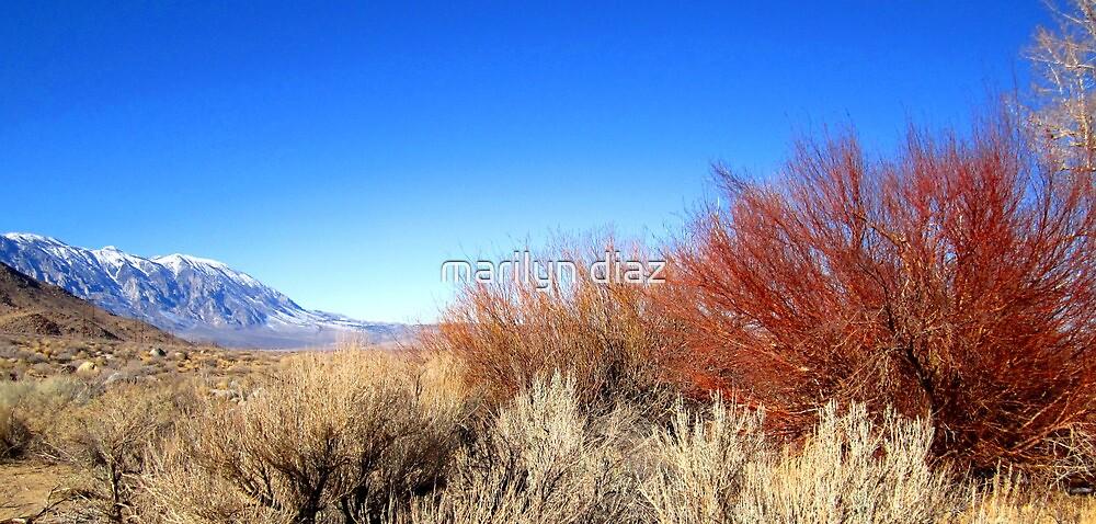 Winter Desert Colors by marilyn diaz