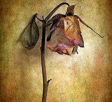Wall Flower by Jessica Jenney