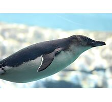 GLIDING PENGUIN IN WATER Photographic Print