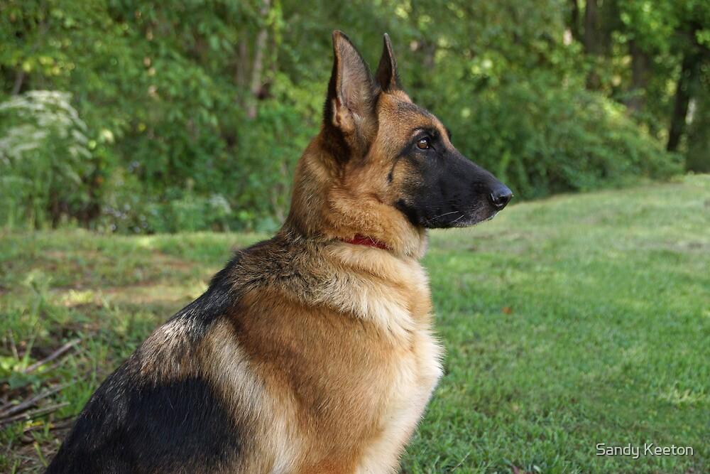 German Shepherd Profile by Sandy Keeton
