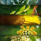 Plant Spirals  by donnarebecca