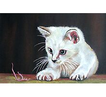 Cat With Feather Photographic Print
