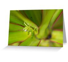 Hopper II Greeting Card