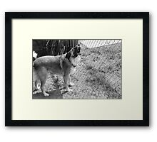I want to play! Framed Print