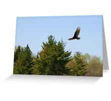 Turkey Vulture Circling Greeting Card