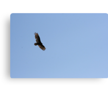 Turkey Vulture Circling 02 Canvas Print