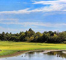 Bunny Creek Drought by Carolyn  Fletcher