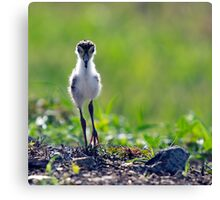 The Chick Canvas Print